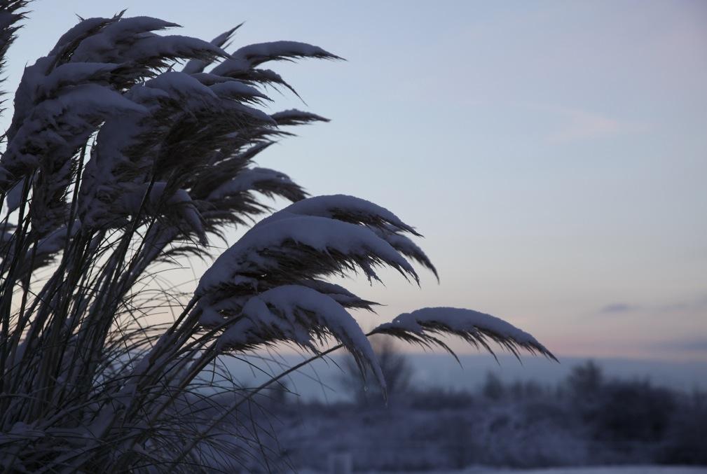 Der Winter hat die Arktis fest im Griff. Noch eine Woche 2010!